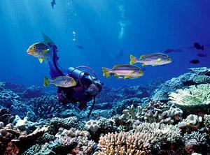 Entdecke die schönsten Riffe in und um Soma Bay!