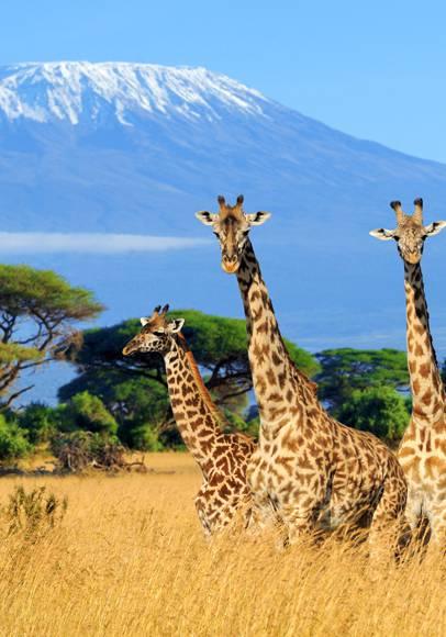Réservez vos vacances au Kenya !