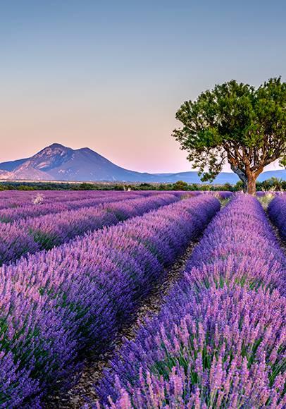 Réservez vos vacances en Provence !